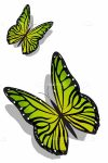 Pair of Lovely Green Butterflies