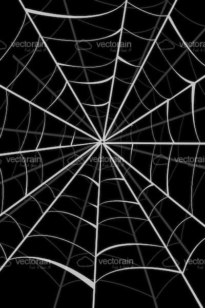 spider web background in black and white vectorjunky