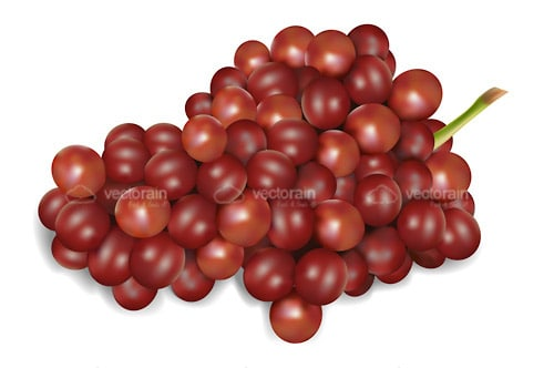 Realistic Red Grapes
