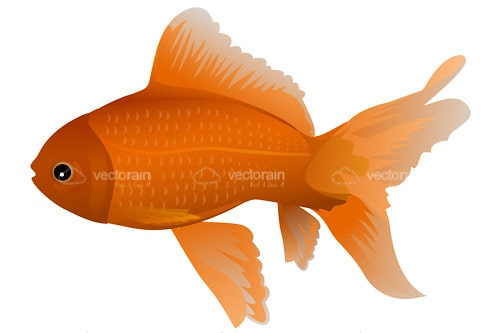 Illustrated Goldfish