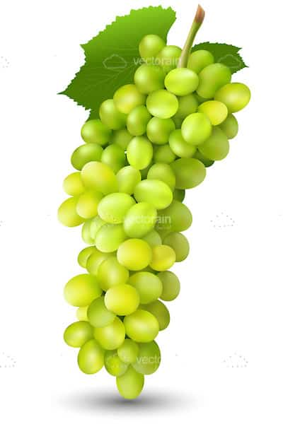 Bunch of Juicy Green Grapes with Stalk and Leaf