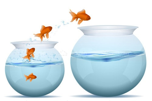 Multiple Goldfish Jumping Between Bowls