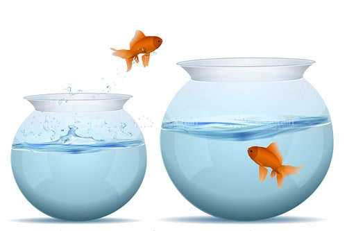 Goldfish Jumping Between Bowls of Water