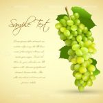 Dark to Light Cream Background with a Bunch of Green Grapes and Sample Text