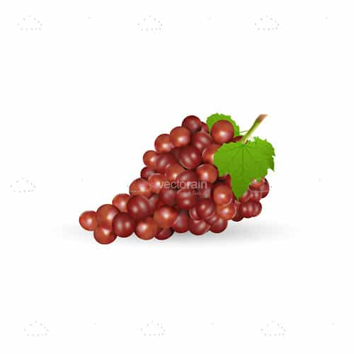 Bundle of Fresh Grapes